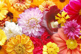 Beautiful background from perfect fresh flowers — Stock Photo
