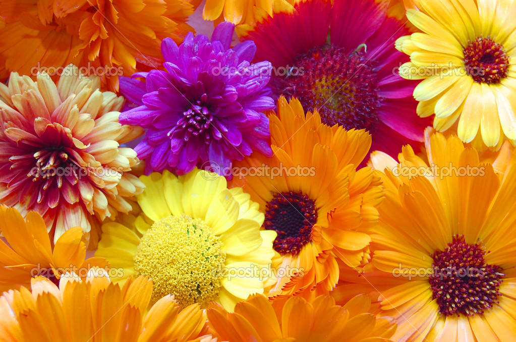 Multi colored flowers pattern background stock photo for How to make multi colored flowers