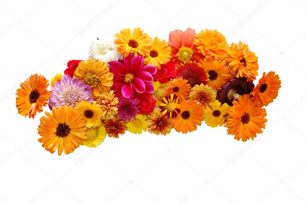 Flowers with petals of various colours on a white background — Stock Photo #2605570