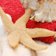 Starfish and seashells on towel background - Stock Photo