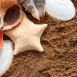 Starfish and seashells on golden sand — Stock Photo