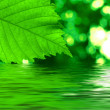 Green leave reflecting in the water — Stock Photo