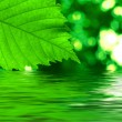 Stock Photo: Green leave reflecting in water