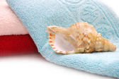 Very beautiful seashells on towel background — Stock Photo