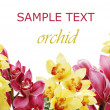 Beautiful branch of a fresh orchid — Stock Photo