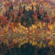 Autumn forest reflected in a lake — Stock Photo