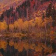 Panorama of a colorful autumn lake. — Stock Photo