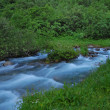 Rapid mountain stream — Stock Photo