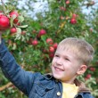 Cute boy in apple orchard — Stock Photo #1309101