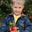 Cute boy in apple orchard — Stock Photo #1309279
