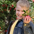 Cute boy in apple orchard — Stock Photo #1309395