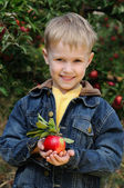 Cute boy in apple orchard — Stock Photo