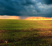 Meadow with clouds and thunderstorm — Stock Photo