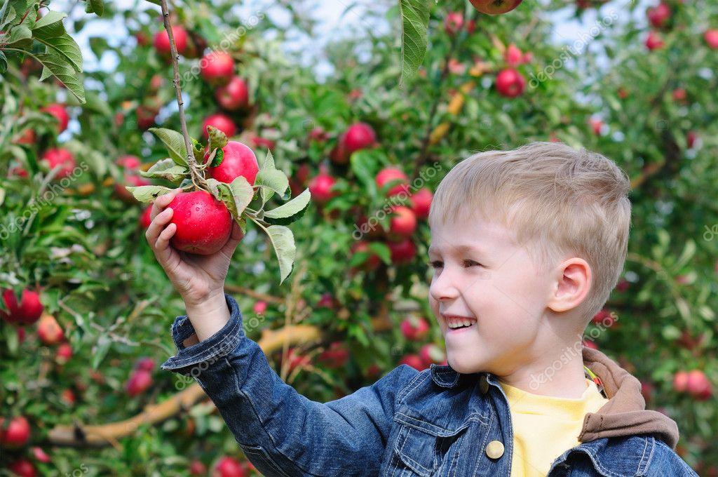 苹果园的可爱男孩