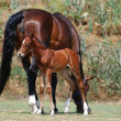 Mare and colt - Stock Photo