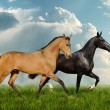 Two beautiful horses in field — Stock Photo #1312696