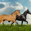 Stock Photo: Two beautiful horses in field