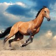 Stock Photo: Running bay horse against blue sky