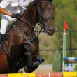 Photo: Rider in jumping show