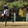 Stock Photo: Advanced Dressage test