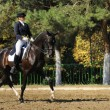 Advanced Dressage test — Stock Photo