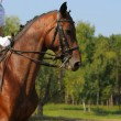 Dressage horse — Stock Photo #1317517