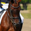 Dressage horse — Stock Photo #1317531