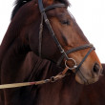 Portrait of bay horse isolated — Stock Photo #1317785