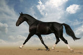 Running black horse against blue sky — Stock Photo