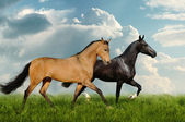 Two beautiful horses in the field — Stock Photo