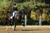Advanced Dressage test — ストック写真