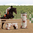 Rider in the jumping show - Foto de Stock