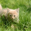 Royalty-Free Stock Photo: Beautiful kitten on the green grass