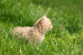 Beautiful kitten on the green grass — Stock Photo