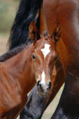 Mare and colt — Stock Photo