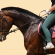 Dressage horse - Stock Photo