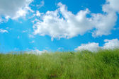 Green grassland and clouds — Stock Photo