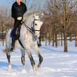 Stock Photo: Girl on white dressage horse in winter