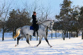 Girl on white dressage horse in winter — Stock Photo