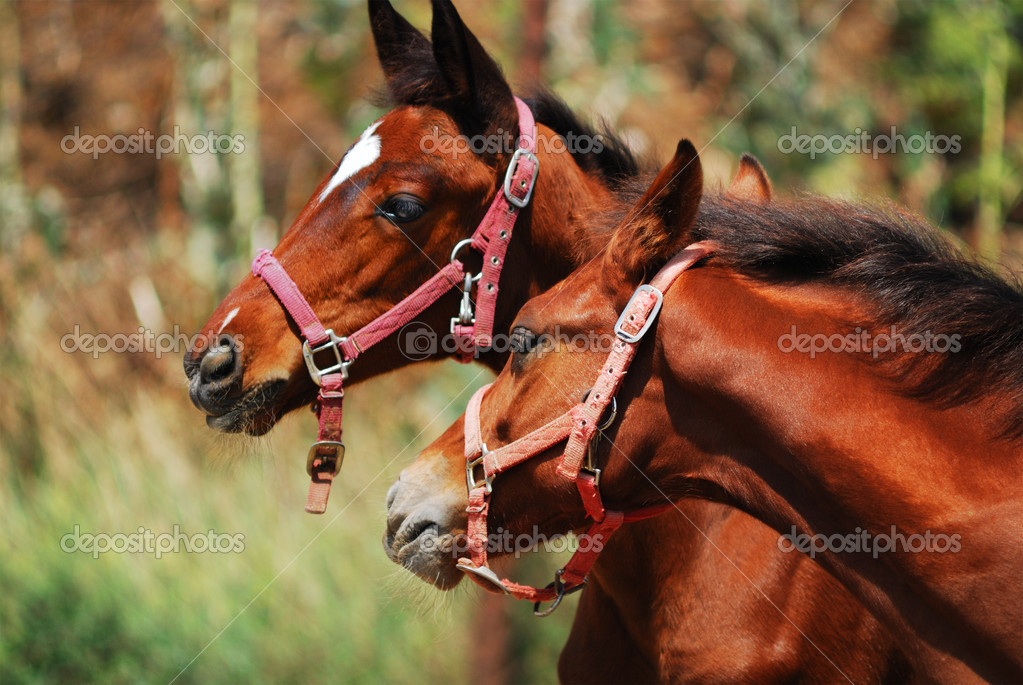 Two foals  on a ranch — Stock Photo #2540024