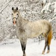 White horse in winter forest — Stock Photo #2650003