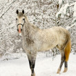 Stock Photo: White horse in winter forest