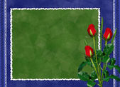 Green card with red rose on the darkblue — Stock Photo