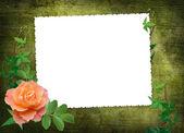 Biała ramka z czerwona róża — Zdjęcie stockowe