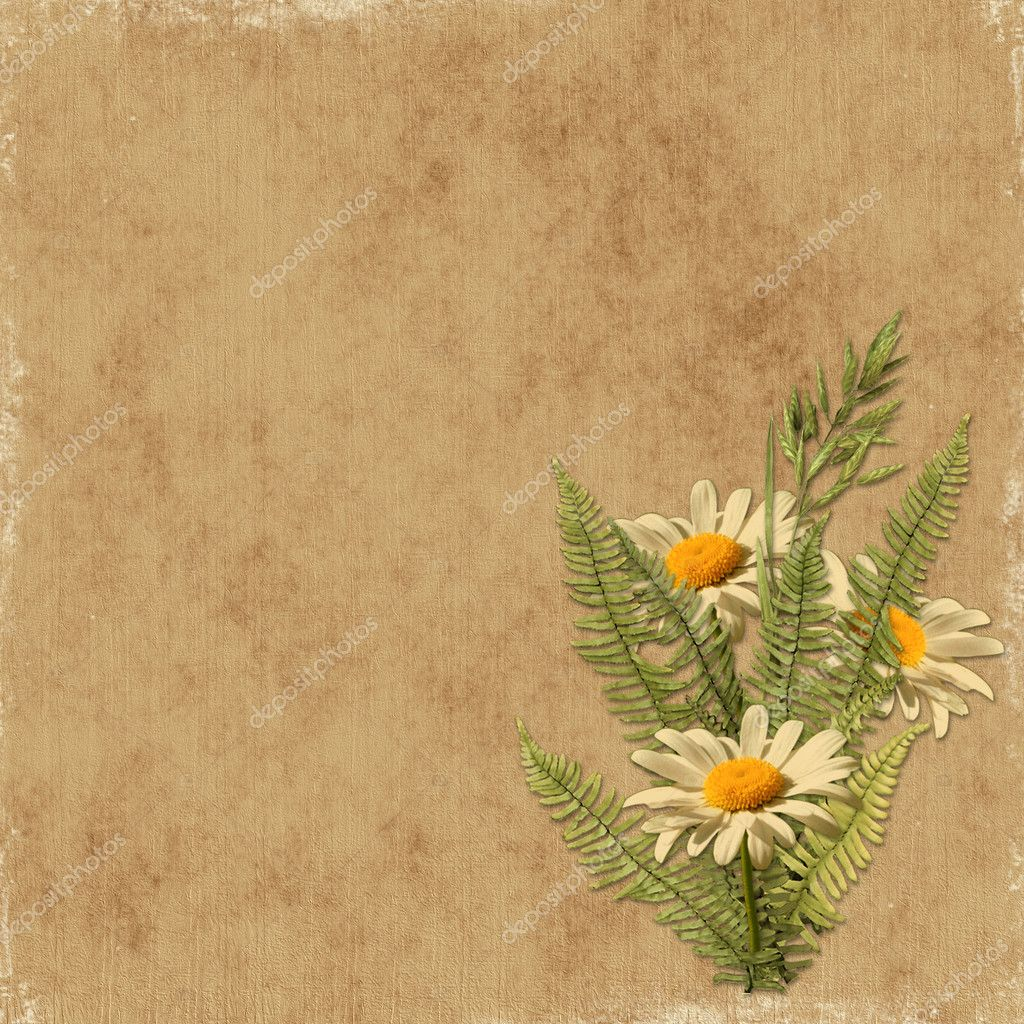 Card for the holiday with camomile on the abstract background — Zdjęcie stockowe #1530255