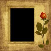 Vintage rosa e cartão de papel velho — Foto Stock