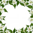 White frame with flower — 图库照片 #2355338