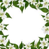 Marco blanco con flores — Foto de Stock