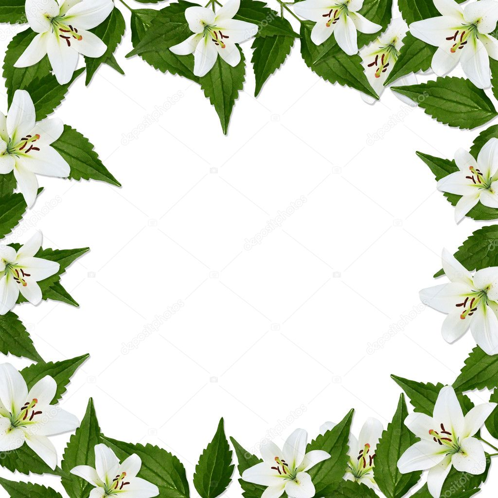 White frame with flower on the white background — Stock Photo #2355338