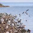 Sea birds ashore — Stock Photo